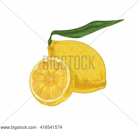 Whole Fruit And Half Of Fresh Sour Lemon. Composition Of Yellow Citruses With Peel And Leaves. Reali