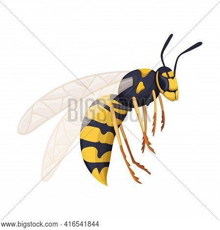Wasp Vector Cartoon Icon. Vector Illustration Insect Wasp On White Background. Isolated Cartoon Illu