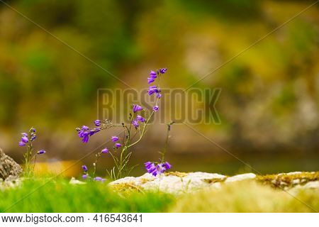 Lake, River Or Norwegian Fjord Shore With Blue Flowers.