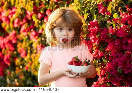 Cute Cheerful Child Eats Strawberries. The Schoolboy Is Eating Healthy Food. Happy Childhood Concept