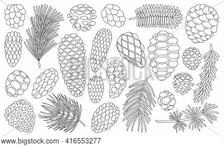 Cone Pine Isolated Outline Set Icon. Vector Illustration Spruce Pinecone On White Background. Vector