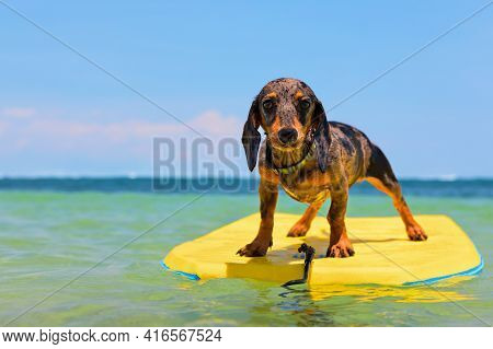 Funny Surfer Dog Have Fun Riding On Bodyboard On Sea Waves. Active Travel Lifestyle, Family Pets Wat