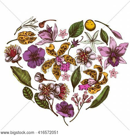 Heart Floral Design With Colored Laelia, Feijoa Flowers, Glory Bush, Papilio Torquatus, Cinchona, Ca