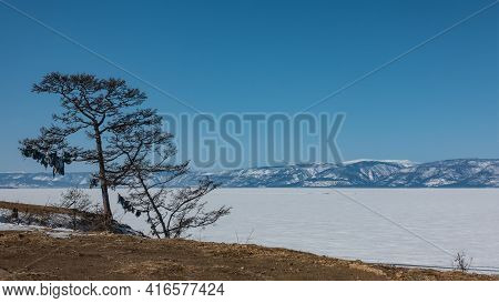 The Frozen Lake Is Covered With Snow. On The Shore There Are Bare Trees, On Their Branches Multi-col