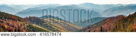 Yellowed Tall Grass Close-up On Hillside, Dark Green Fir Trees Against Backdrop Mountains Blue Haze.