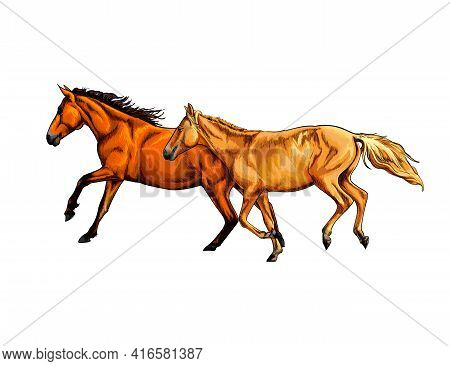 Two Horses Run Gallop From A Splash Of Watercolor, Hand Drawn Sketch. Vector Illustration Of Paints