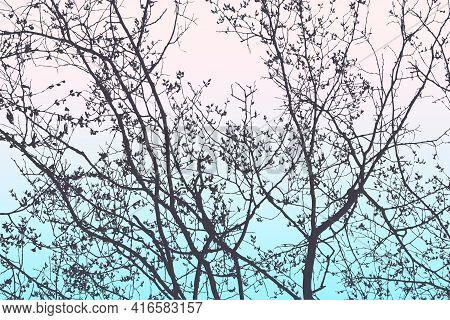 Illustration Of Silhouettes Branches Deciduous Trees In Spring Morning