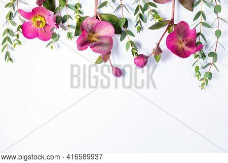 Floral Frame Against White Background. Flat Lay, Top View, Copy Space. Hellebore Flowers And Eucalyp