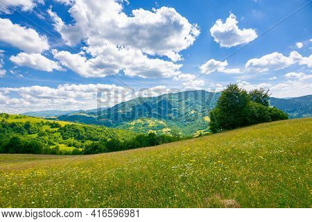 Trees On The Meadow In Summer With Herbs On The Pasture. Beautiful View In To The Distant Mountain L