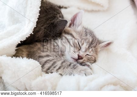 Cute Tabby Kitten Sleeps On White Soft Blanket. Cats Rest Napping On Bed. Feline Love And Friendship