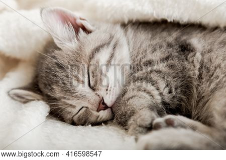 Cute Tabby Kitten Sleep On White Soft Blanket. Cats Rest Napping On Bed. Comfortable Pet Sleep At Co