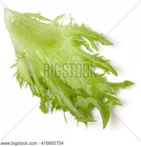 fresh frillice iceberg leaf salad isolated over white background. Top view, flat lay.