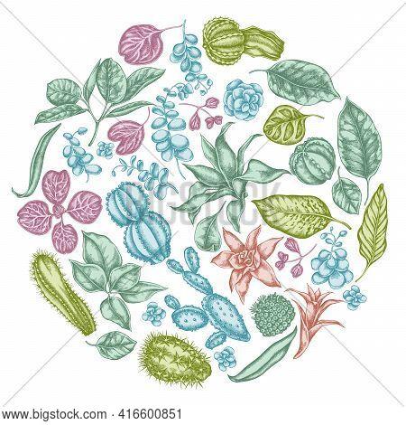 Round Floral Design With Pastel Ficus, Iresine, Kalanchoe, Calathea, Guzmania, Cactus Stock Illustra