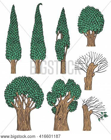 A Set Of Deciduous Trees Isolated On A White Background. Old Forest Trees With Thick Trunks And Gree
