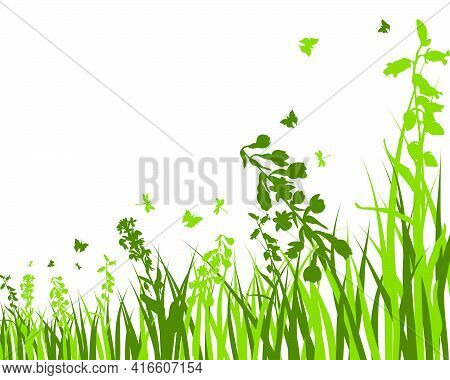 Green Spring Meadow Grass. Fresh Color Plants, Seasonal Growth Grass, Separated Botanical Elements,