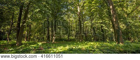 Idyllic Forest In The Springtime, Soft Sunlight. Panoramic Nature Forest, Sun Rays Panorama Of Ecolo
