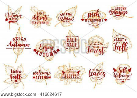 Autumn Leaves, Fall Season Sale Labels And Icons, Vector Holiday Lettering. Autumnal Leaf, Oak Acorn