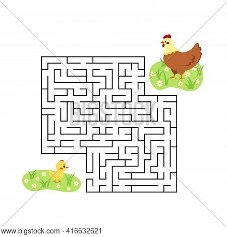 Farm Maze Game Chicken Find Hen In Labyrinth Isolated On White Background.