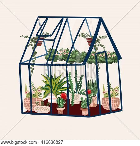 Greenhouse With Tropical Plants. Glasshouse In Garden With Cactus, Succulent In Pots. Botanical Cult