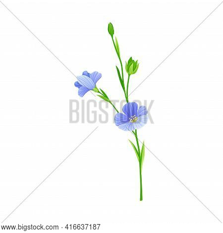 Flax Or Linseed As Cultivated Flowering Plant Specie With Blue Flowers On Stem Vector Illustration