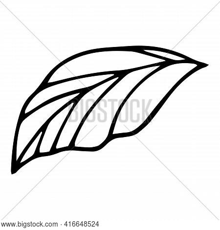 Bio Leaf Icon. Hand Drawn And Outline Illustration Of Bio Leaf Vector Icon For Web Design