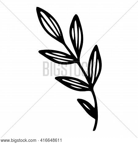 Field Leaf Branch Icon. Hand Drawn And Outline Illustration Of Field Leaf Branch Vector Icon For Web