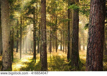 Magical Deep Foggy Autumn Forest. Park. Beautiful Scene Misty Old Forest With Sun Rays,