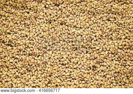 Medicago Sativa - Organic Alfalfa Seeds. Healthy Food