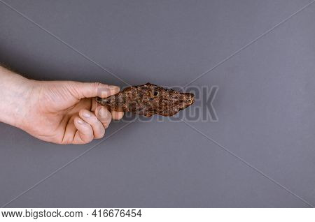 Hand With With Dog Treats On Gray Background. The Man Is Holding A Piece Of Dried Beef Lung. Natural