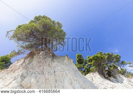 Lonely Tree On A Cliff Against The Beautiful Blue Sky