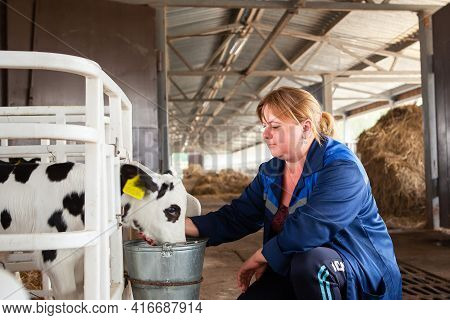 Belarus, Vitebsk Region, March 31, 2021. A Female Dairy Farm Worker Takes Care Of The Calves, Feeds