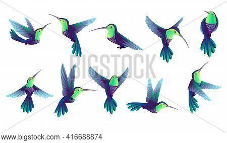 Set Of Small Hummingbird Cartoon Animal Design Smallest Bird In World Vector Illustration Isolated O