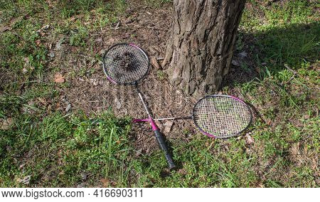 Two Badminton Rackets And Fir Cones Lie By The Trunk Of A Tree In A Coniferous Forest. Outdoor Games