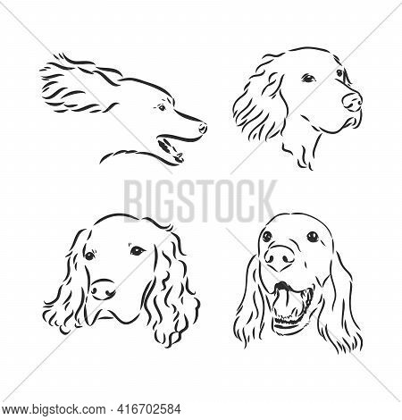 Sketch Of Dog Irish Setter. Vector Illustration