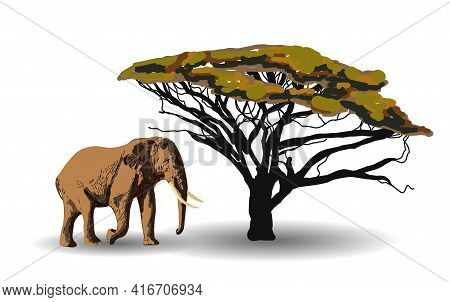 Ethnic Trend. Painting In African Style. Elephant In The Savannah. African Animal Isolated On White