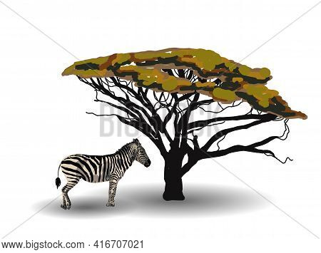 Ethnic Trend. Painting In African Style. Zebra In The Savannah. African Animal Isolated On White Bac