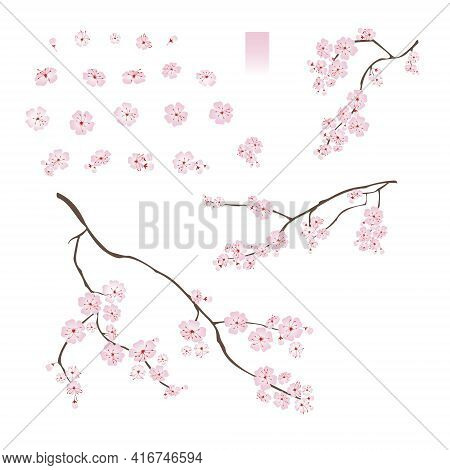Blooming Cherry Sakura. Set Of Varied Flowers Buds Branches Gradient Vector Illustration Isolated On