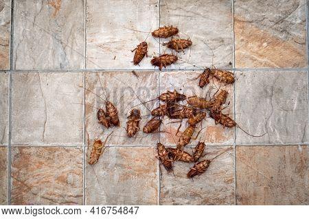 Cockroach Dead On Tile Background. Animal Concept.
