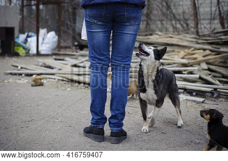 Woman And Dog. Girl Feeds Stray Dog On The Street. Animal Care Concept, Homeless Problem, Veterinary