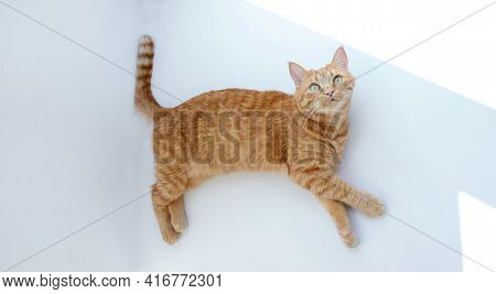 Cute Ginger Cat Lying Down Relaxing Or Napping On White Table With Hard Sunlight. Feline Concept. Hi