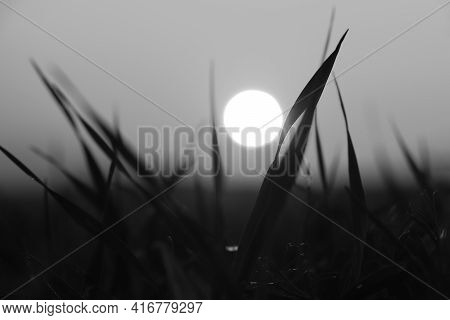 Black And White Image Of A White Ball In The Entanglements Of Grass. Minimalism. Sunset In The Grass