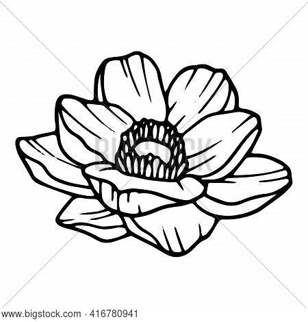 Beautiful Poppy Icon. Hand Drawn And Outline Illustration Of Beautiful Poppy Vector Icon For Web Des