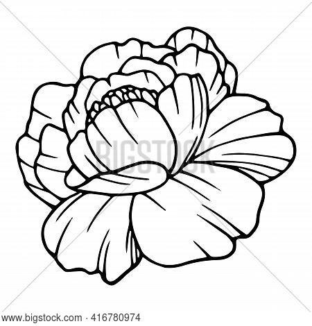 Freedom Poppy Icon. Hand Drawn And Outline Illustration Of Freedom Poppy Vector Icon For Web Design
