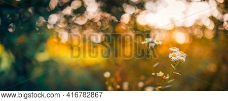 Tranquil Relaxing Spring Autumn Fall Nature Field Background. Soft Peaceful Golden Hour Sunlight Pan