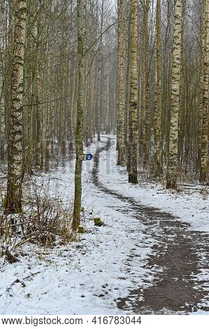 Trail Through Birch Forest Covered In Snow