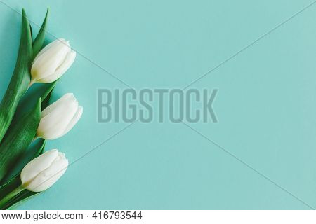 Tender White Tulips On Pastel Turquoise Background. Greeting Card For Women's Day. Flat Lay. Place F