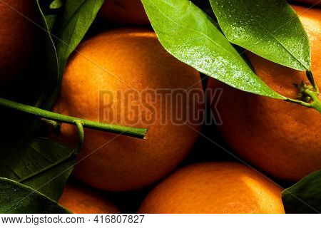 Beautiful, Orange Clementines With Green Leaves In Light In Palermo, Sicily, Italy (food And Drink)