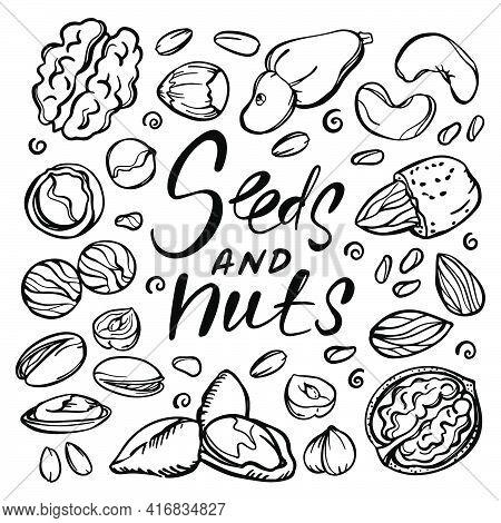 Seeds And Nuts Monochrome Food Sketch With Pistachio Almond Seed Walnut Hazelnut Cashew With Text Cl