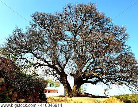 Tree A Big One