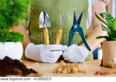 Home Gardener Transplanting Plant In Ceramic Pots On The Wooden Table. Concept Of Home Garden. Sprin
